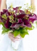 цветы значение фиалки